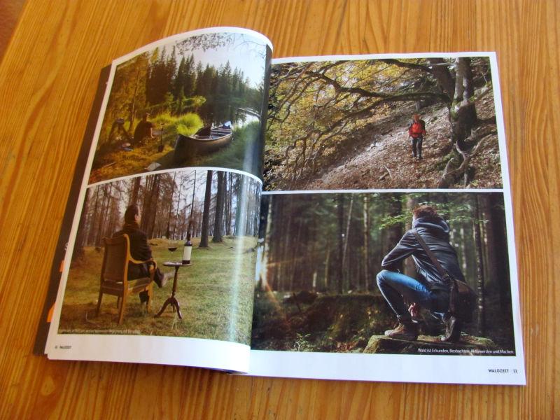 Waldzeit Bilder