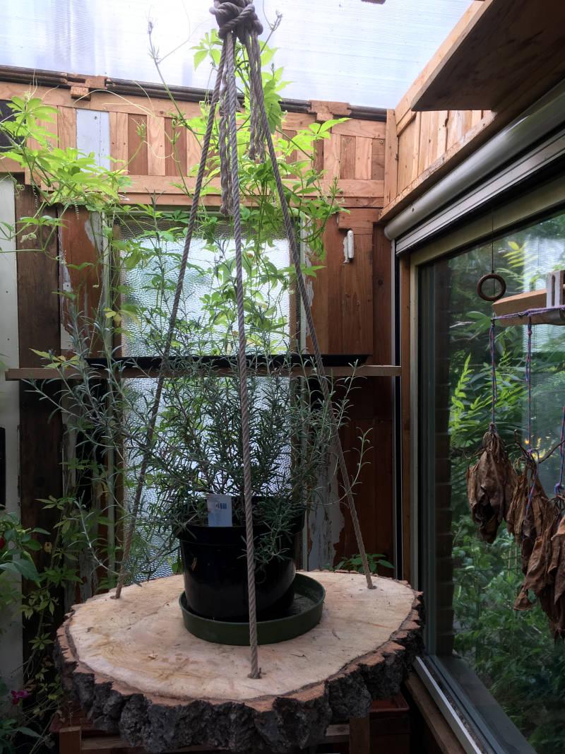 Baumscheibe aufgehangen