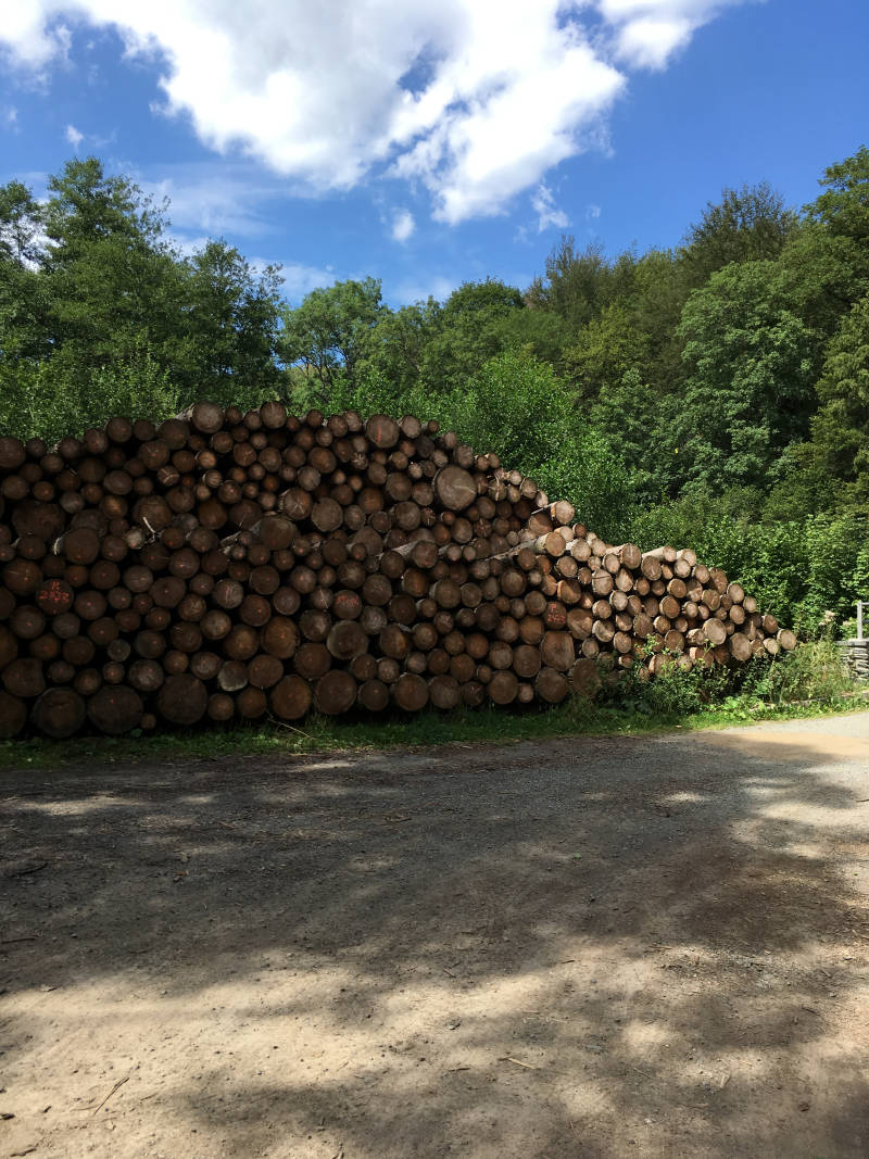 Brennholz Wald