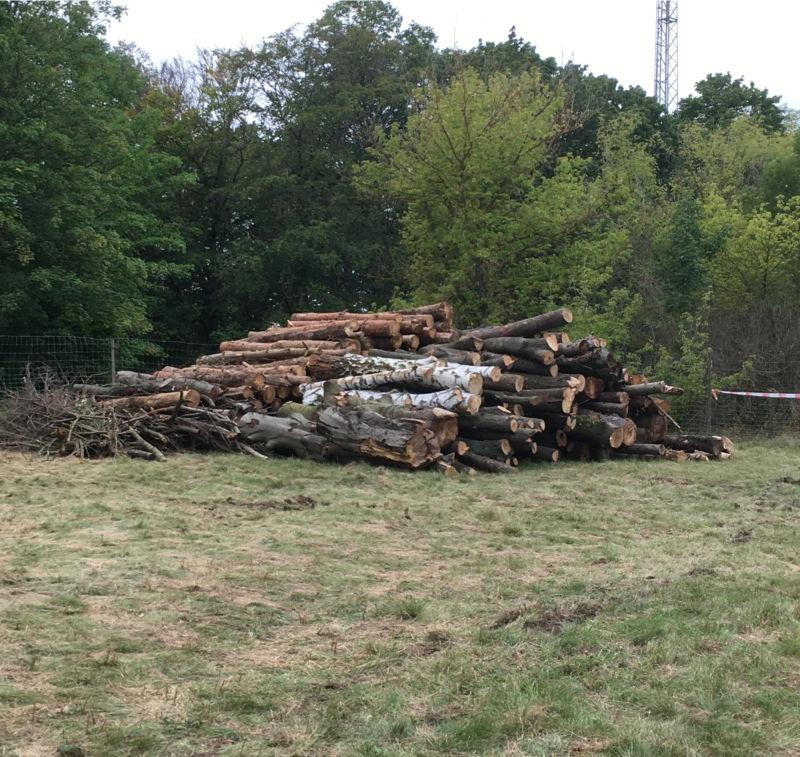 Holzlager mit Zaun