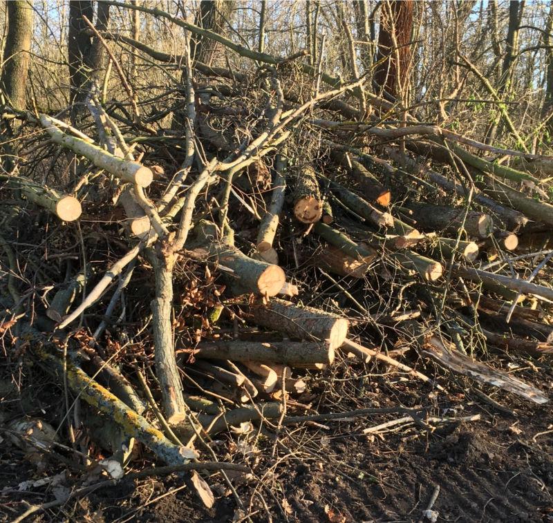 Sturmholz als Brennholz