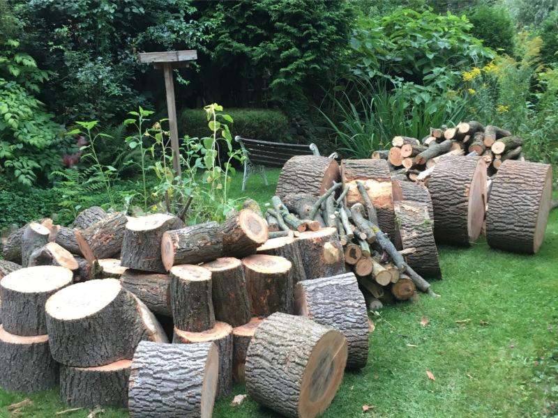 Esche als Brennholz