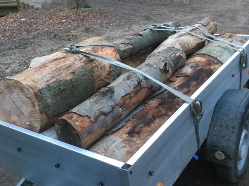Zuschnitt Buche Stammholz